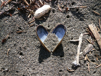 A beautiful, heart-shaped bivalve we spotted on the beach! Seeing evidence of marine life reminds us of why we work so hard to keep the beaches clean.