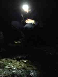 Leah surveying sea stars by headlamp